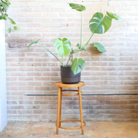 Vintage thonet kruk / plantentafel