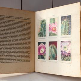 Prentenboek cactussen