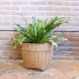 Vintage mand pot plant