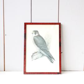 Vintage lijst vogel