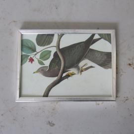 vintage lijst met vogelprint