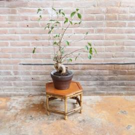 Vintage plantentafel /bijzet rotan