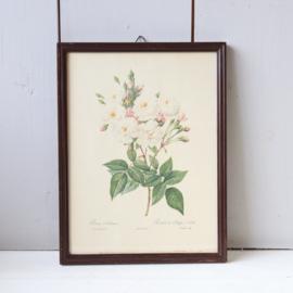Vintage  lijst met rozen