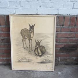 Vintage tekening hert