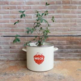 Vintage weckpan pot aardbei