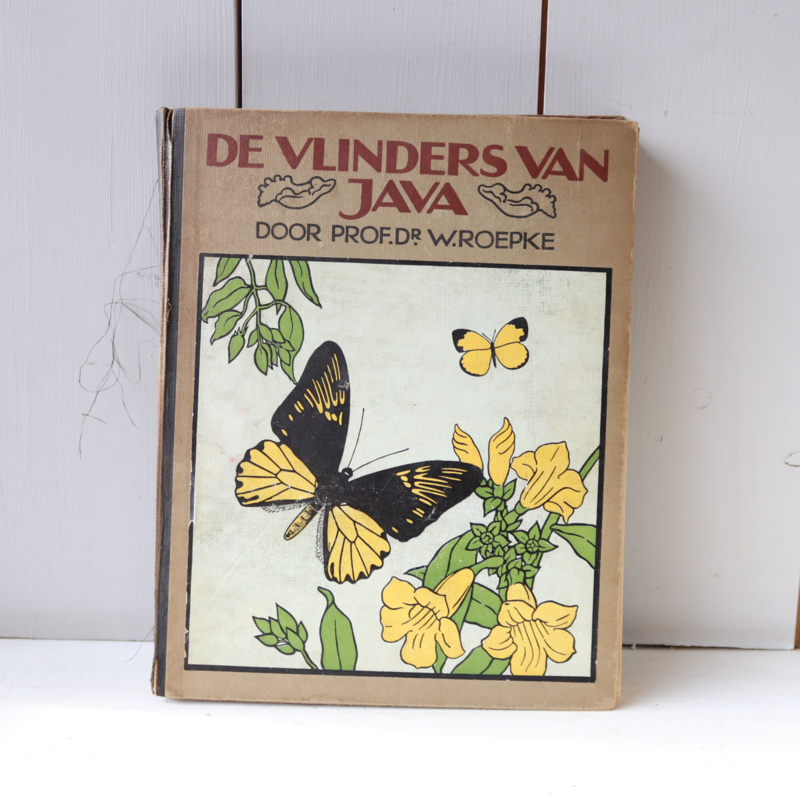 Prentenboek vlinders van java