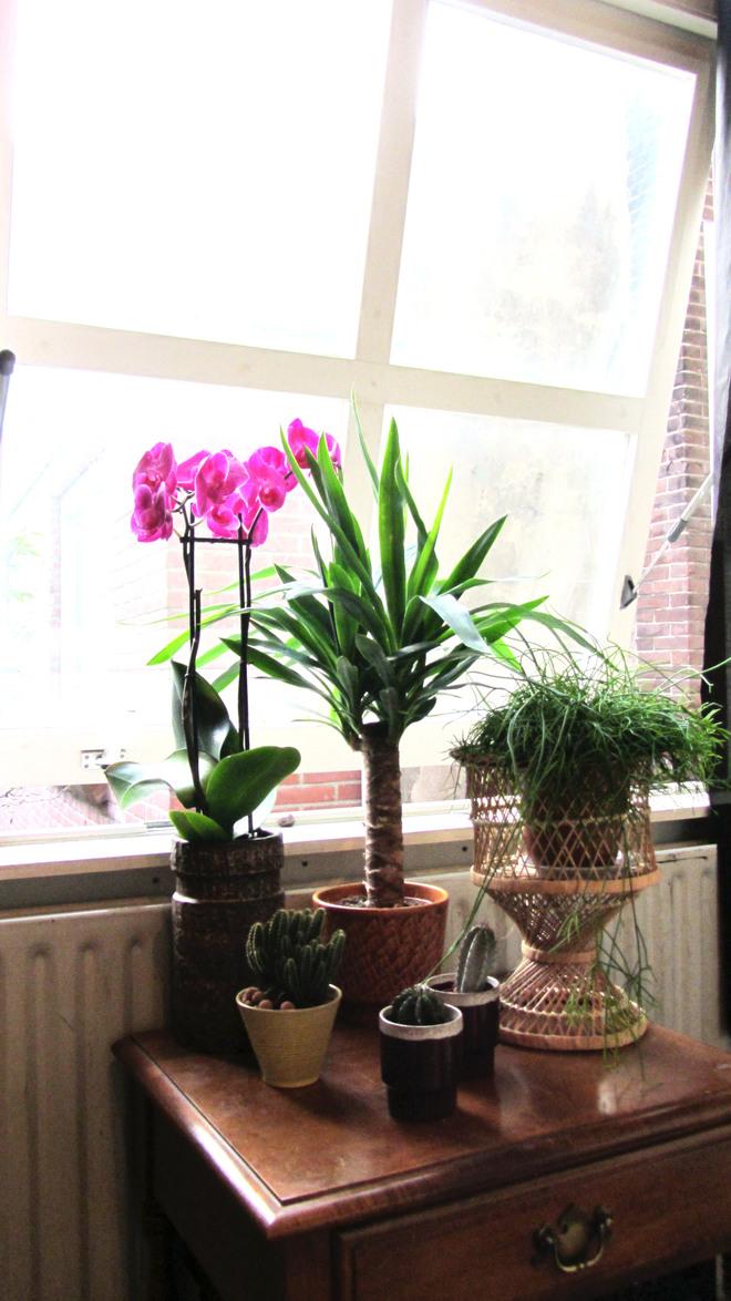 julia raam planten.jpg