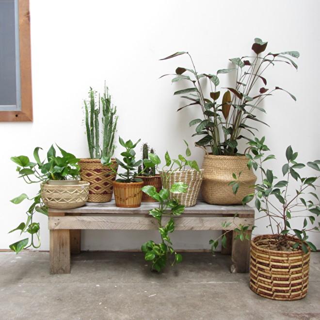 Rieten Manden Voor Planten.Blog Bohemian Manden Voor Je Urban Jungle Blog Meutt