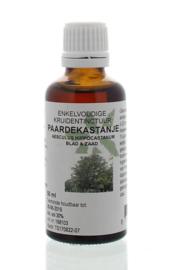 Paardekastanje -Aesculus hippocastanum