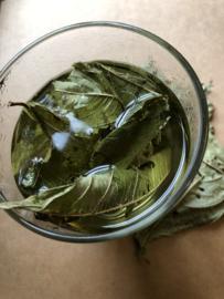 Sisline thee