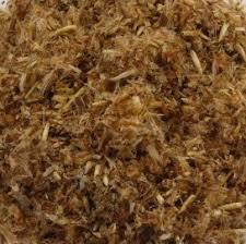 Dennentoppen |pini fructus