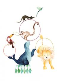 Postkaart | Circus Zeeleeuw
