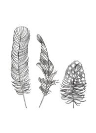 Postkaart | Feathers