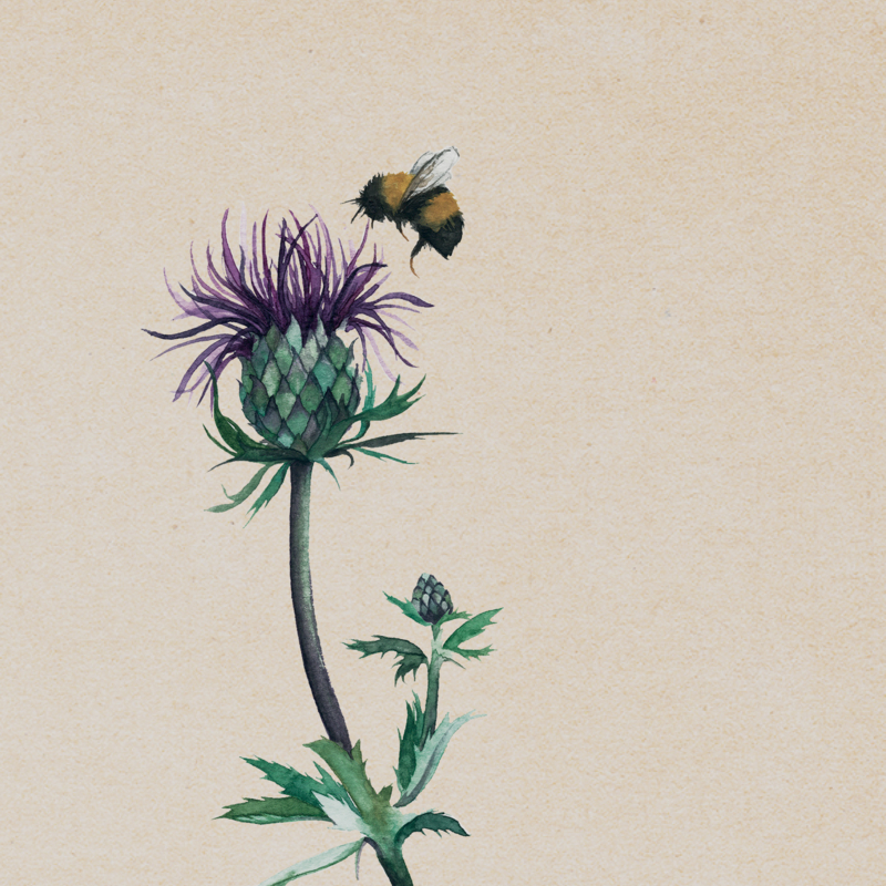 LIMITED EDITION | Dubbele kaart | THISTLE (LYD11)
