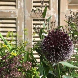 Bloemen Purple - Yellow