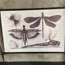 Wandkleed Dragonfly