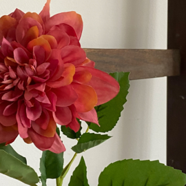 Chrysant warm-roze
