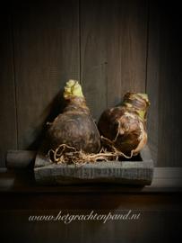 Aura peeperkorn Wooden parat met 2 amerilles bollen