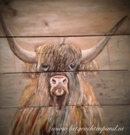 Schotse hooglander op steigerhout
