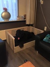 Hondenmand Hector Bicolor geleverd in Varsseveld