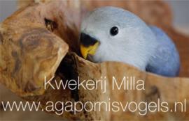Ivm Corona svp deze informatie even doorlezen voor het reserveren van een vogeltje