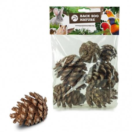 Dennenappeltjes -Forrest pinecone