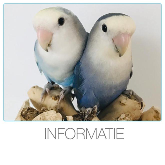 https://www.agapornisvogels.nl/c-2869687/informatie/