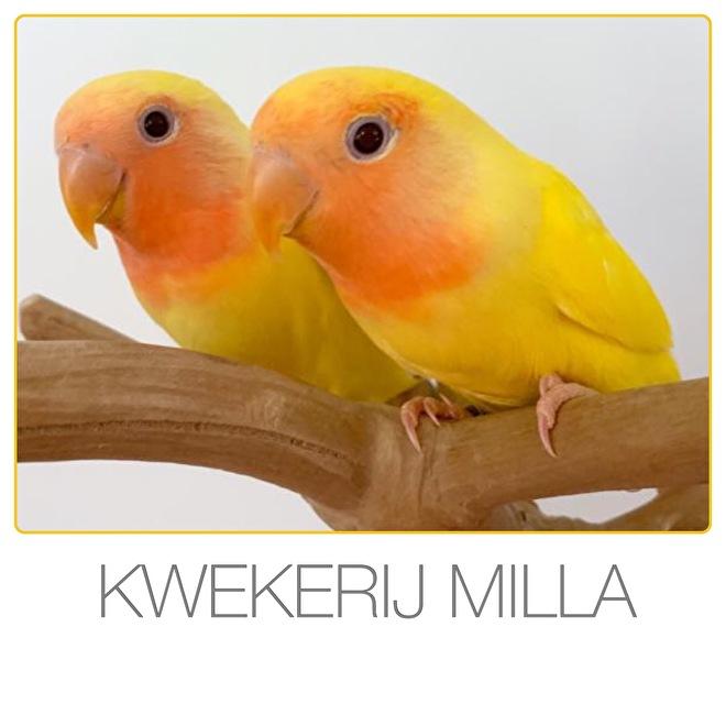 https://www.agapornisvogels.nl/c-3533864/onze-kwekerij/