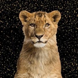Bambiblauw - Paneel Leeuwenwelp