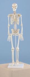 Skelet Patrick klein