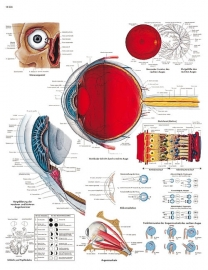Aandoeningen aan het oog poster (50 x 67) cm