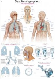 Het ademsysteem poster (70 x 100) cm