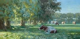 Koeien bij bomenrij in ochtendlicht