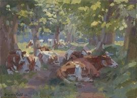 Koeien onder de bomen