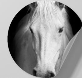 Behangcirkel zelfklevend - Paard zwartwit - sticker