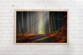 Poster Verlicht pad door donker bos