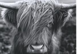 Poster - Schotse hooglander - zwart wit   -  dierenposter