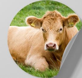 Behangcirkel zelfklevend - Roodbruine koe - sticker