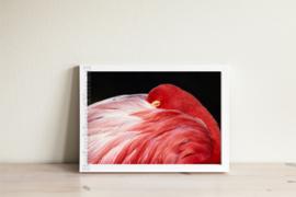 Poster Flamingo - roze zwart