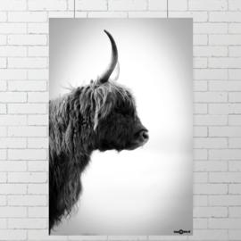 Poster Schotse Hooglander IV, zwart wit