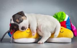 Weltrusten puppie