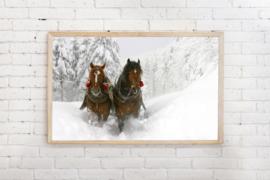 Poster Paarden in de sneeuw