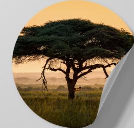 Behangcirkel zelfklevend - Afrikaanse boom - sticker