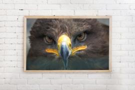 Poster Roofvogel