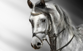 Poster Paard black-white