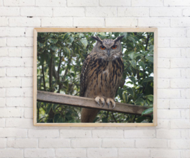 Poster Uil op stok