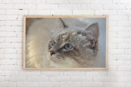 Poster kat in de sneeuw