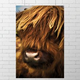 Poster Schotse Hooglander II