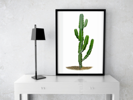 Poster Cactus (A) witte achtergrond A5 / A4