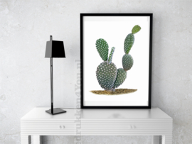 Poster Cactus (b) in kleur op witte achtergrond A5 / A4